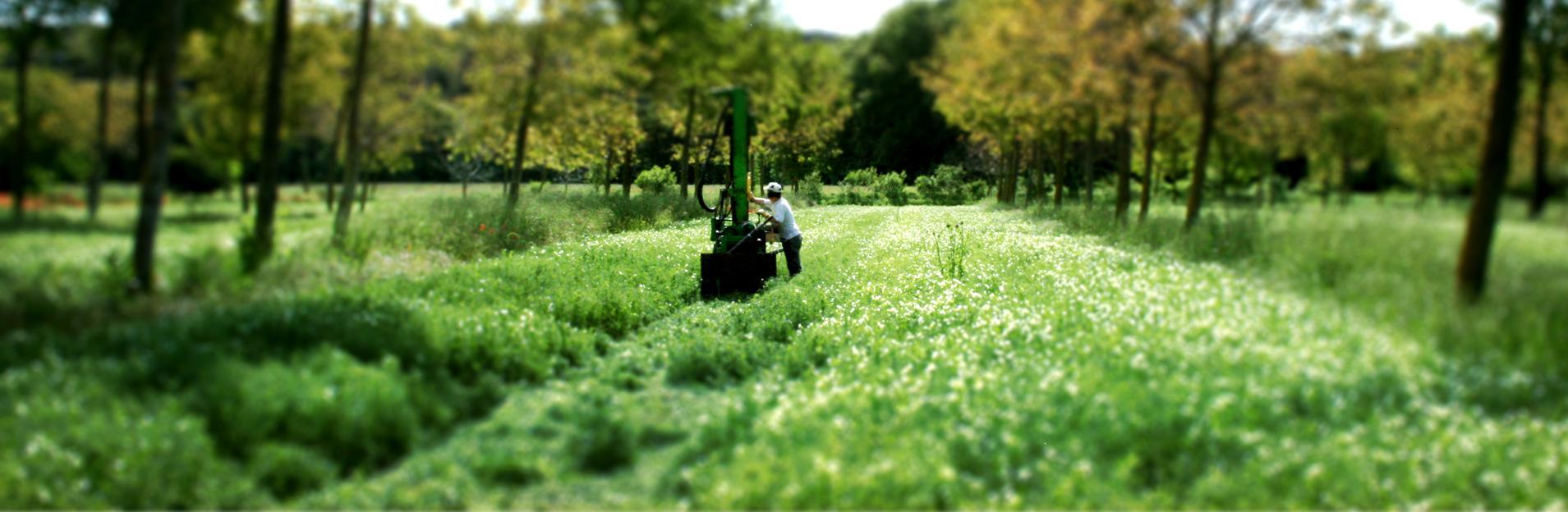 Agripsol, agroforesterie pour la protection des sols